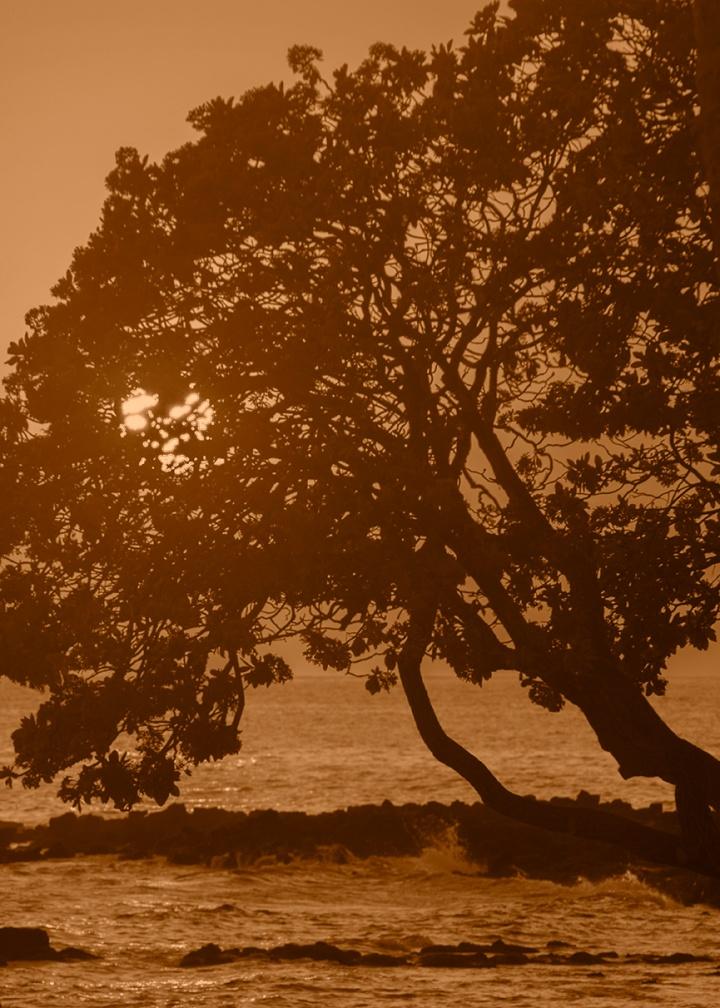Sunset light peeking through the tree branches. Photo by Alina Oswald.