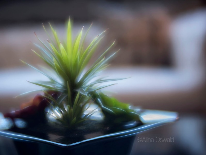 Plant on a Plate. Lensbaby Velvet Photography by Alina Oswald.