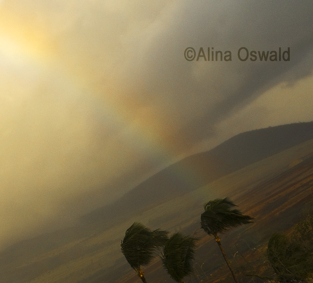 Rainbow over Hawaii Palm Trees. Photo by Alina Oswald.