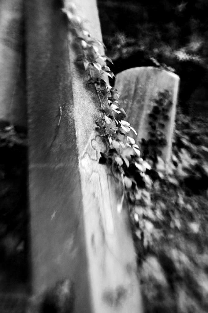 Life & Death. Photo by Alina Oswald.