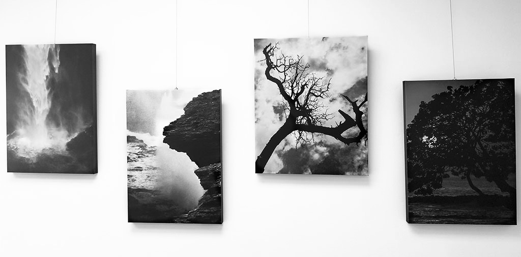B&W nature photography by Alina Oswald on canvas at La Vie Galerie.
