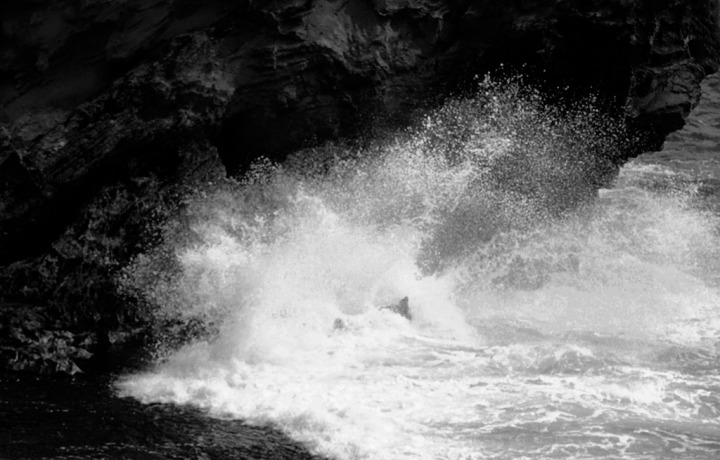 Rage. Black-and-white image by Alina Oswald.