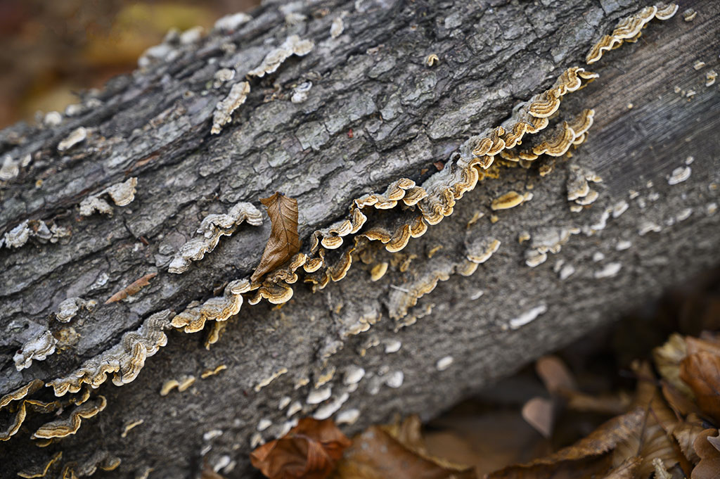 Fungus growing on the dead trees, in the woods. Photo by Alina Oswald. All Rights Reserved.