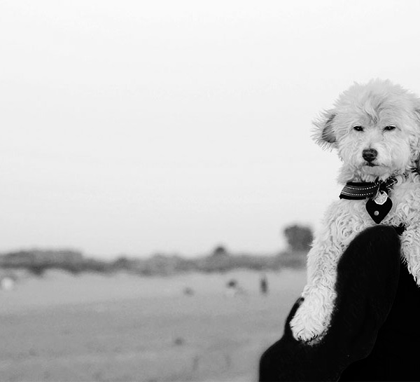 Dog-Walking on the beach. B&W Photo ©Alina Oswald.