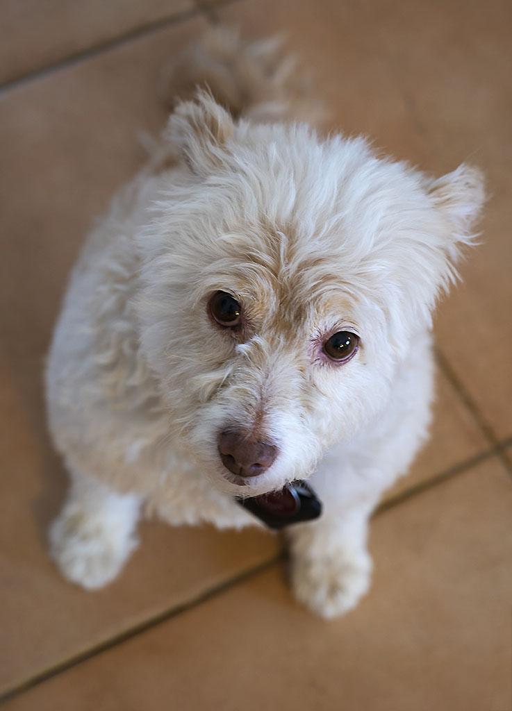 Dog Photography by Alina Oswald.