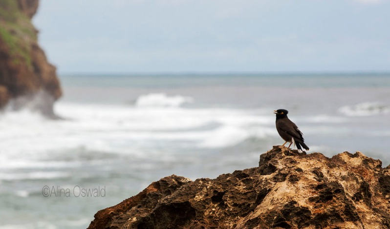 Bird on a Cliff. ©Alina Oswald.