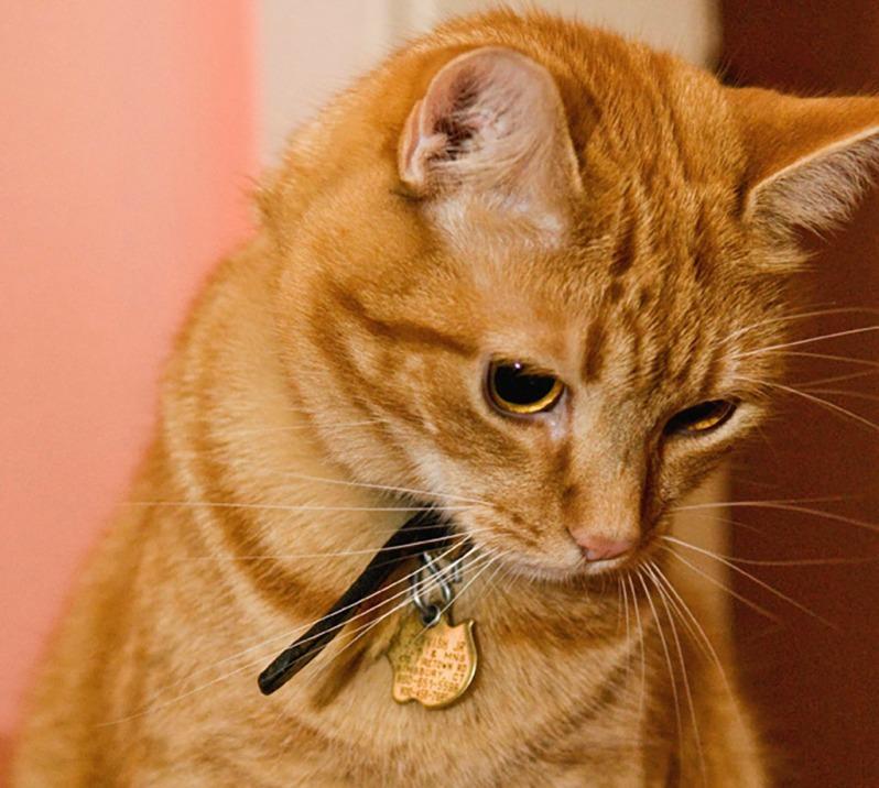 Cat photography. ©Alina Oswald.